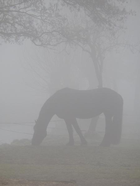 paarden in de mist ,benschop #buienradar
