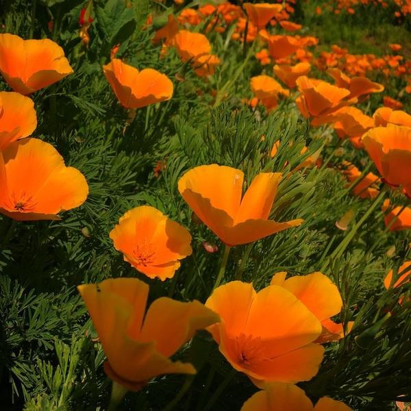 #flowerstagram #flowers #sunnyday #orange #color