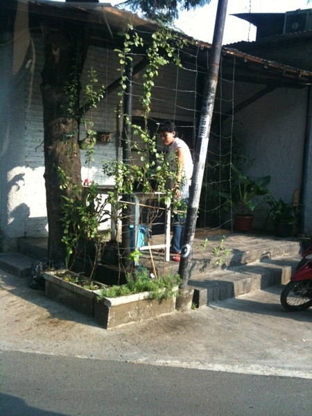 Watering the plants in the morning