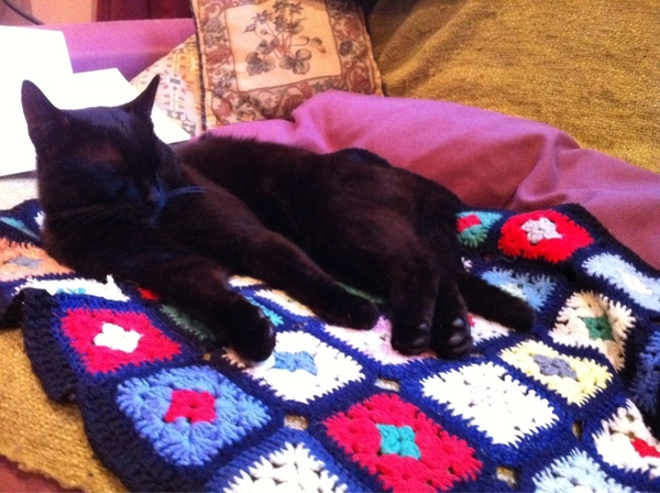 Ben the Cat seems pleased we're back from the Wye Valley