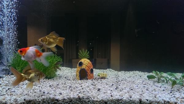 Sinds vandaag woont spongebob in het aquarium bij @indivirtual. Hij doet nu een tukje ;)