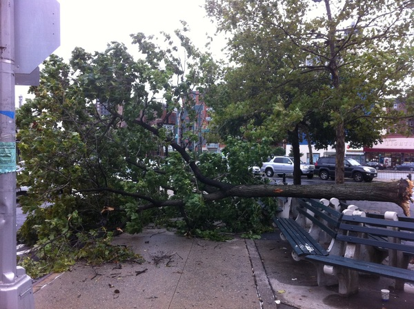 First time out since #Irene...downed tree at 67th toad and queens blvd #foresthills