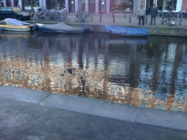 Little baby ducks in the canal