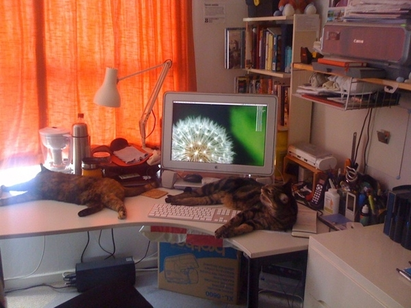 I do not appear to be allowed to use my desk.