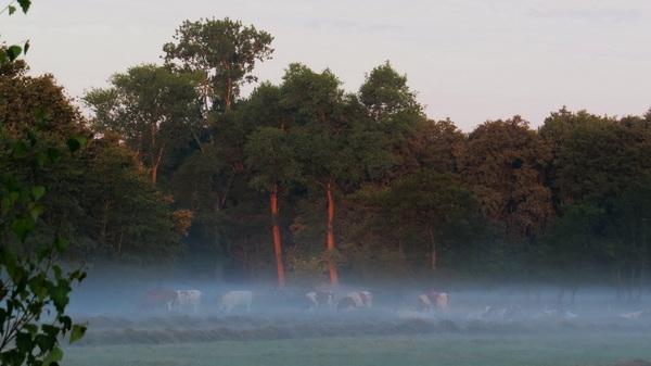 Lichte mist tegen de bosrand vanmorgen #buienradar