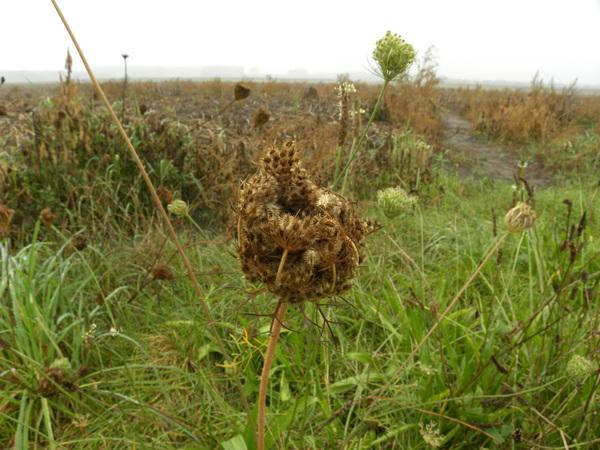 Natuur in Clinge #buienradar