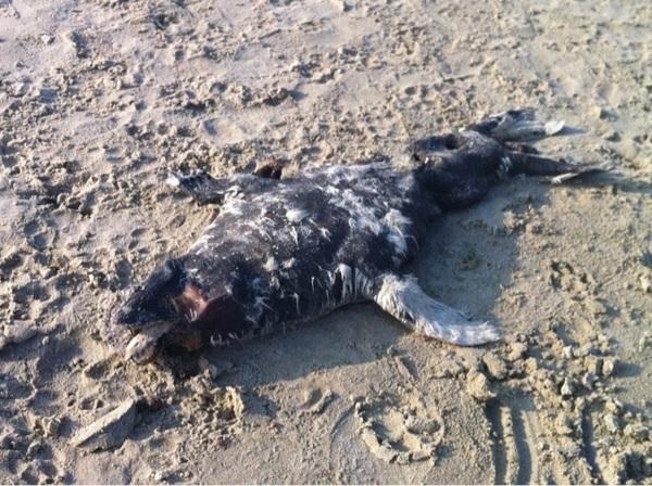 Triest tafreel op het Groene strand op Terschelling. #natuur