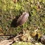 Deze pissebed kroop omhoog op de plantenbak  #buienradar