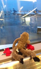 Barnabus & his new lobster buddies looking at the planes.