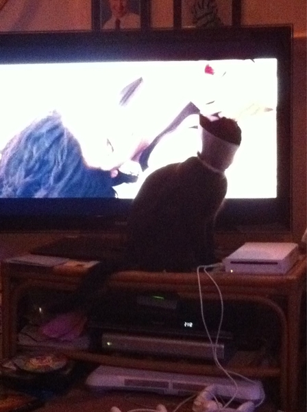 We're watching Sahara. It's an action film, but Ben the Cat's getting a bit too into it.