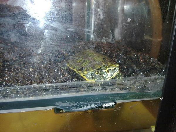 1 van de schildpadjes van de keet :)