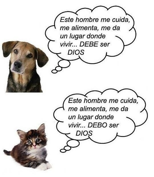 Por qué los perros y los gatos son tan diferentes?