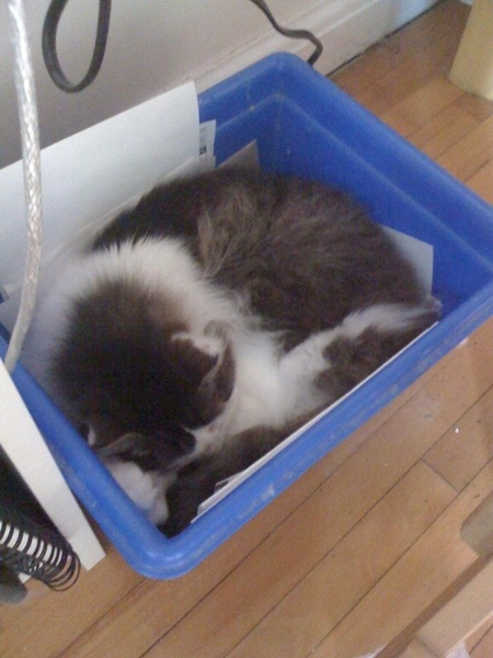 Now Patchie hides in the recycling bin under my desk when the kids come over. :c