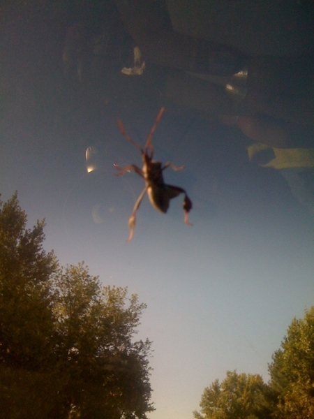 Huge bug on my window!!!