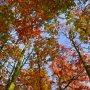 herfstkleuren #buienradar