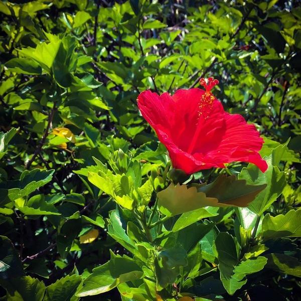 #memories #summer #dailypic #amami #tropical #flower #guesthouse #redvelvet #green