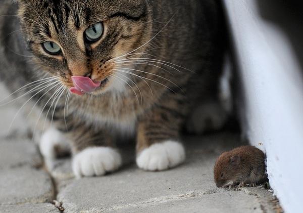 #Cat & #Mouse / #Kat & #Muis