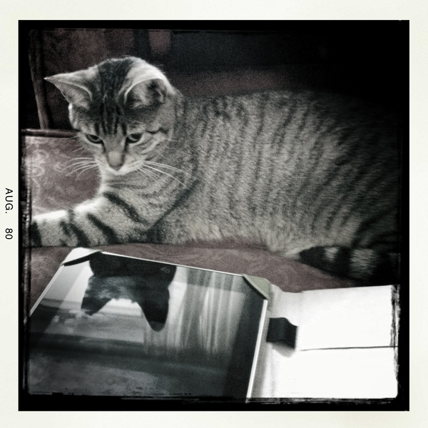 @Pebbels like the iPad