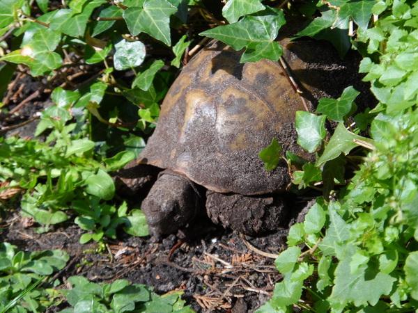 Ons schildpad vindt het nu tijd voor de lente en ontwaakt uit zijn winterslaap. Gemaakt in Den Haag, Jeannet Wentink #buienradar