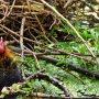 Ohoh, ik ben nog zo klein en het warme nest is zooooo hoog. #buienradar