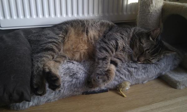 Wat een leven, gewoon op een kussentje voor de verwarming liggen..