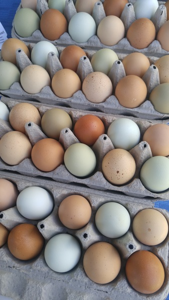 Colorful, fresh eggs! #farmersmarket #growersmarket #locavore #taos #nm