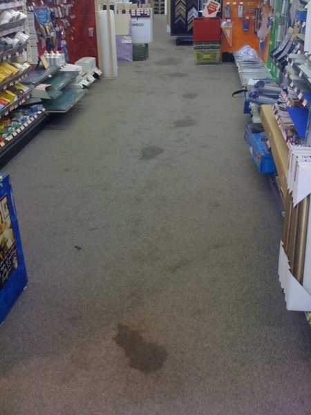 Aisle of poop-prints. (after cleaning attempts) The carpet cleaners are coming tomorrow. :c