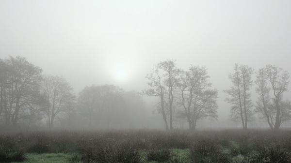 Mist en zo nu en dan het zonnetje dat erdoorheen probeert te prikken. #buienradar