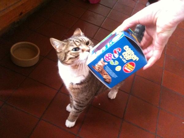 Easter egg cat nip flavour