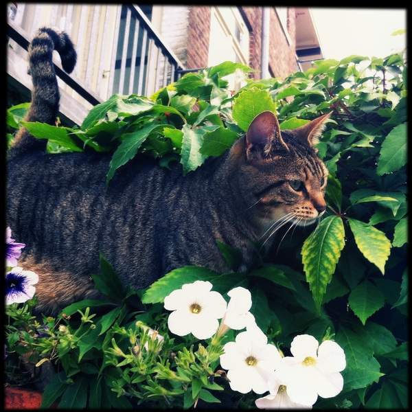 Strolling through the flower pots