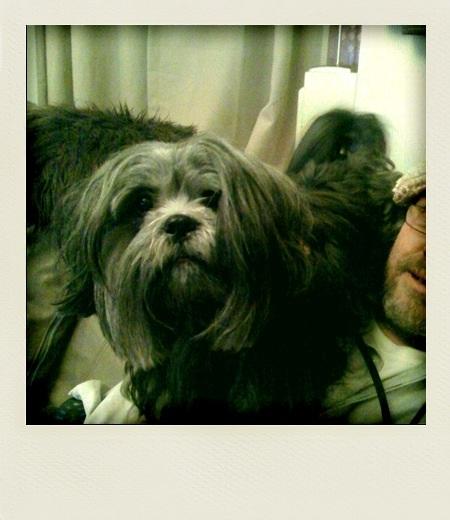 Dog-sitting.