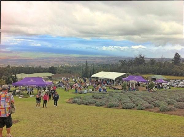 Summer Lavender Festival @aklmaui #mauilavender