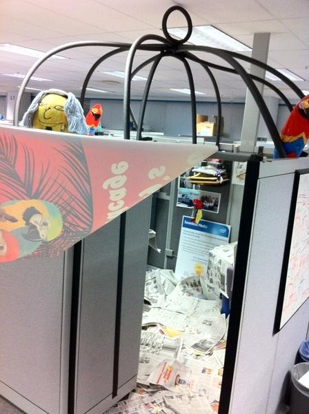 Bird Watchers Beware, Your Cube Becomes  Bird Cage After Intel Sabbatical