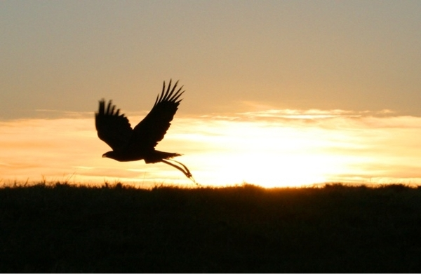 """The Eagle Flies Across The Sun"" Happy New Year 2011"