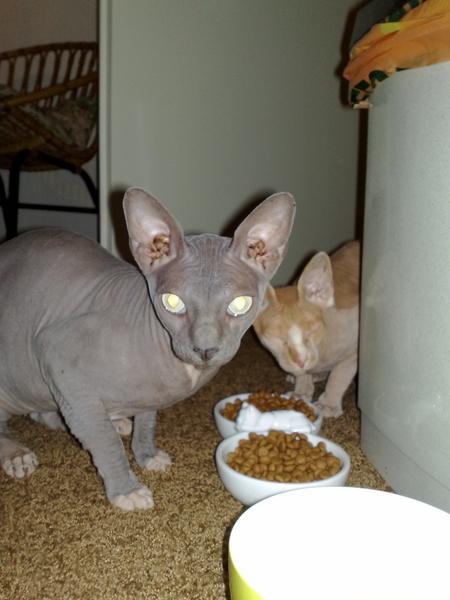 Bruno en Simon zijn er :D #katten