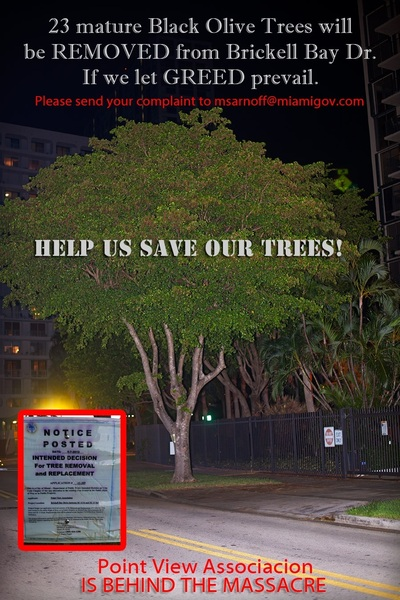 Save the Trees of Brickell Bay Dr in #miami