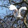 De lepelaars hebben de grootste moeite om zich overeind te houden..harde wind en dan nog bovenin een boom ook.. #buienradar