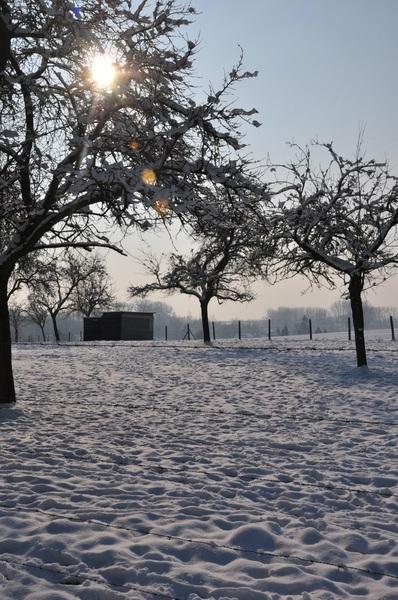 Wandeling langs de velden in Werm, Hoeselt, het had toen de hele nacht gesneeuwd. #winter#sneeuw#zon# #buienradar