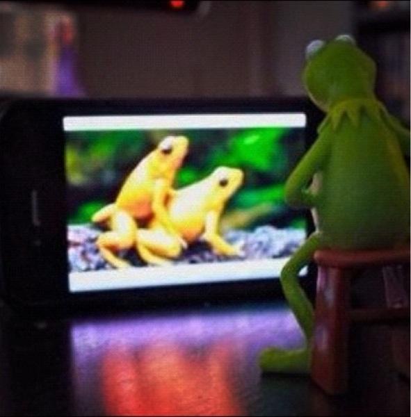 Kermit watching porn #muppets #AH #muppetpunten