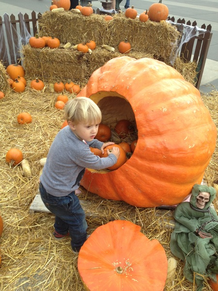 Fletcher of the day: Pumpkin Patch