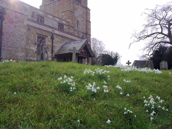 More snowdrops in the Churchyard - Thorpe Malsor, Northamptonshire, UK