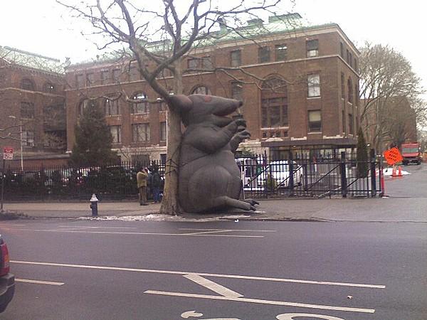 Is Pratt a rat?