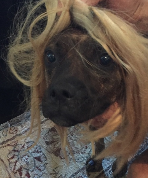 I love dogs. I hate extensions.  but man, do I LOVE a dog wearing extensions!!  x ©  #DrySpaghetti