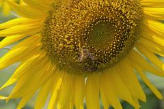 ブンブンブン、蜂さんが飛ぶ~♪