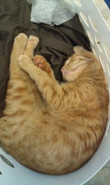 Laundry kitteh!