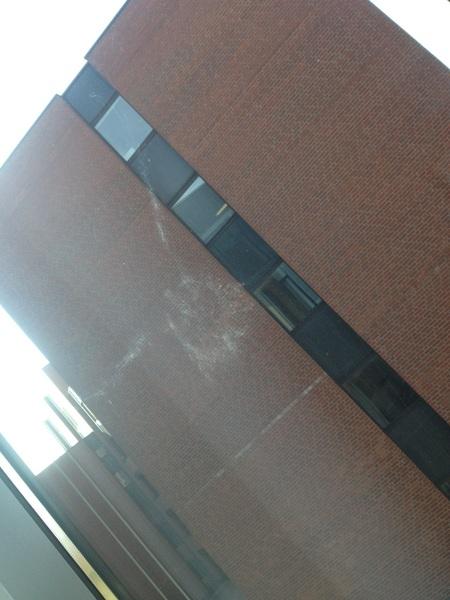 Hier ist noch einmal der Abdruck von der Taube, die gegen mein Fenster gedonnert ist!
