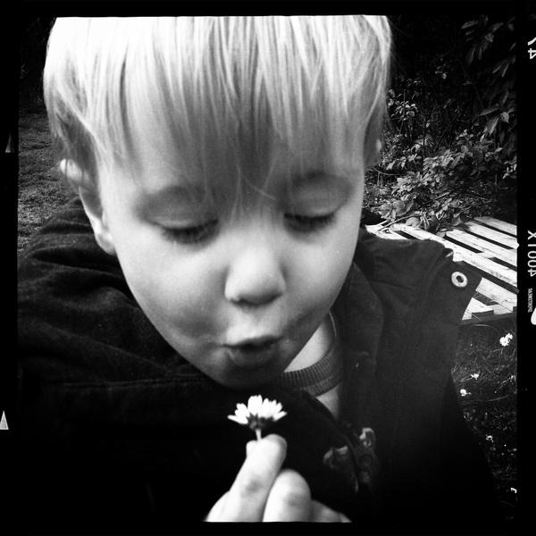 Fletcher of the day: Flower