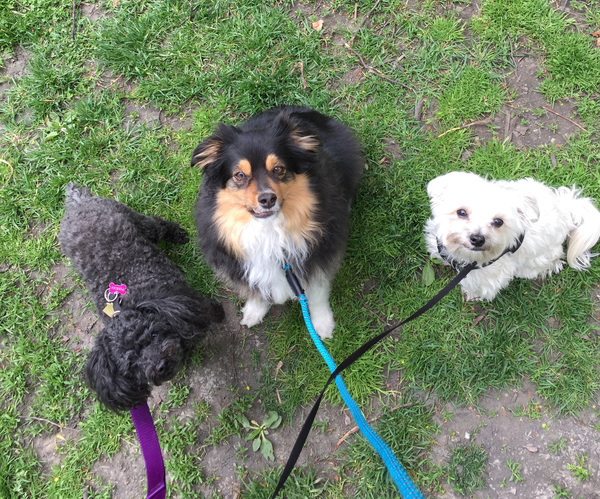 Park time with Porscha, Arrow and Mochi!