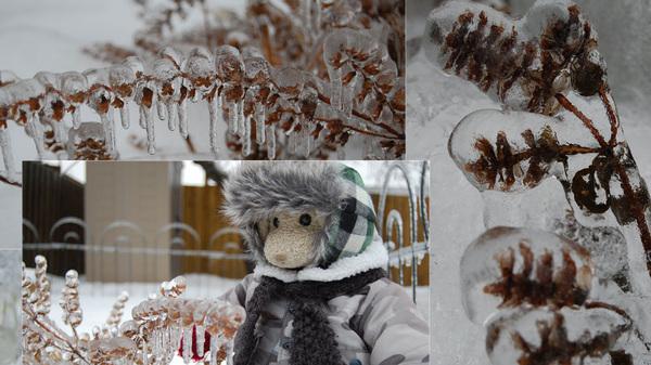 zackary examining our frozen garden