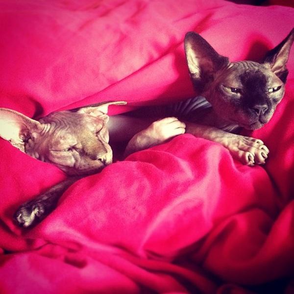 Prrrrrrr #catorgy